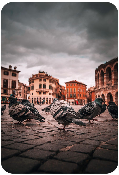 Urban Landscape Photography with Street Animals
