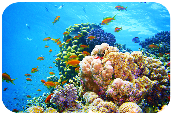 Aquatic Photography Tips for Beginners