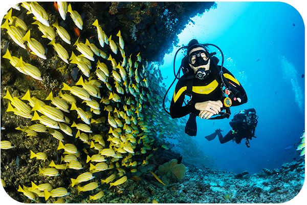 Gear to Use in Underwater Photography