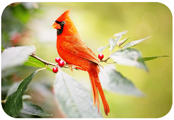 How to Take Stunning Photos of Birds