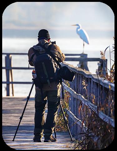 Techniques to Take Amazing Photos of Birds