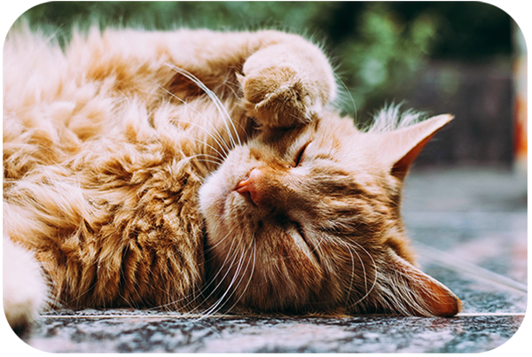 Tips for Taking Photos of Cats