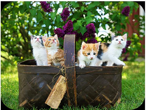 Tips for Taking Photos of Kittens