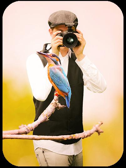Tips to Take Beautiful Photos of Birds