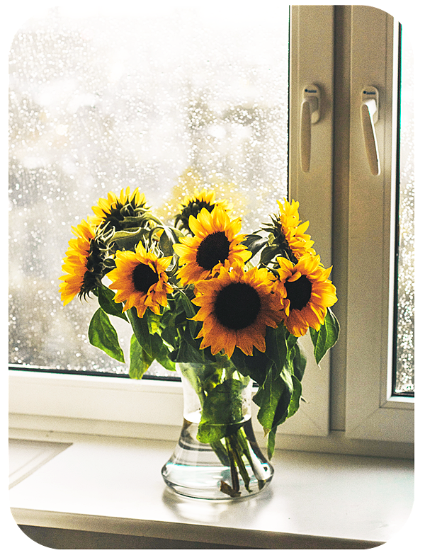 How to Take Photos of Flowers to Use as a Decorative Frame