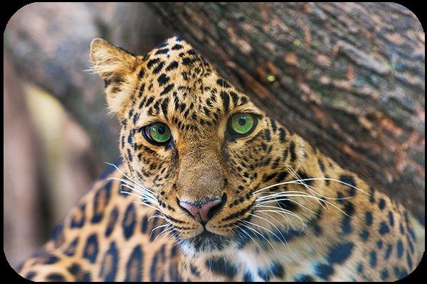 How to Take Photos of Wild Animals