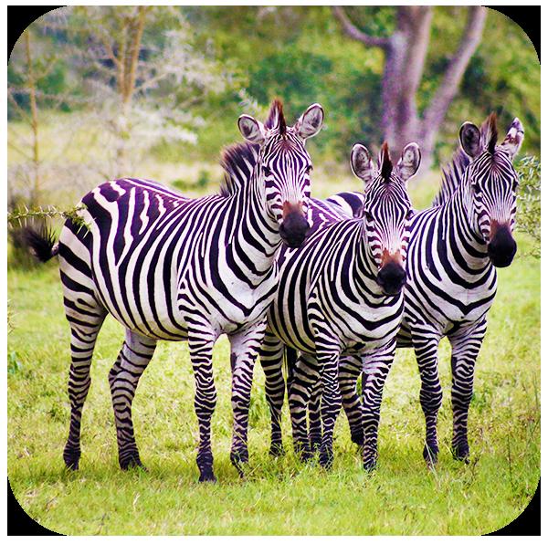 How to Take Photos of Wildlife