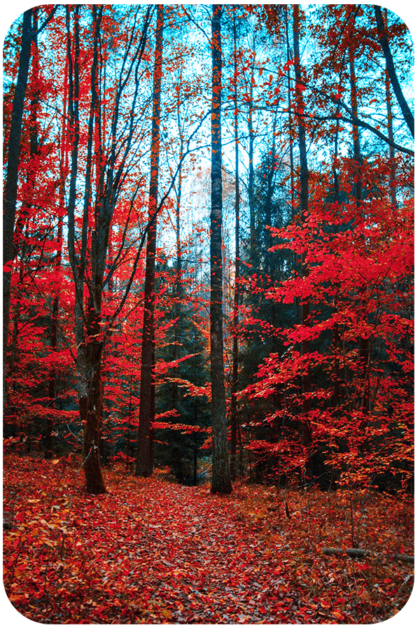 Natural Landscape Photography Tips