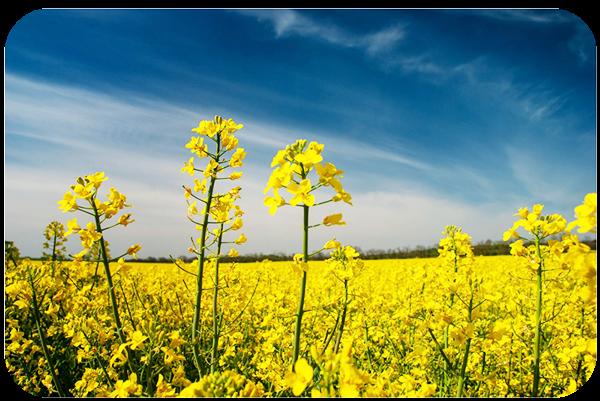 Nature Landscape Photography Tips
