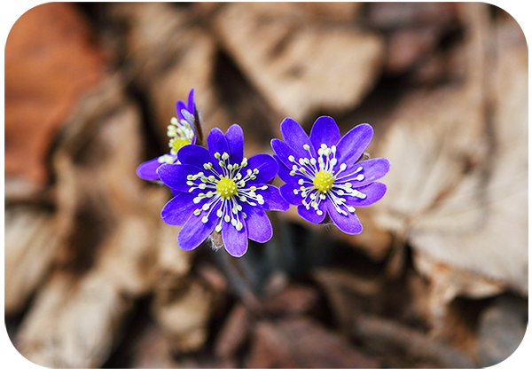 Tips on How to Photograph Flowers